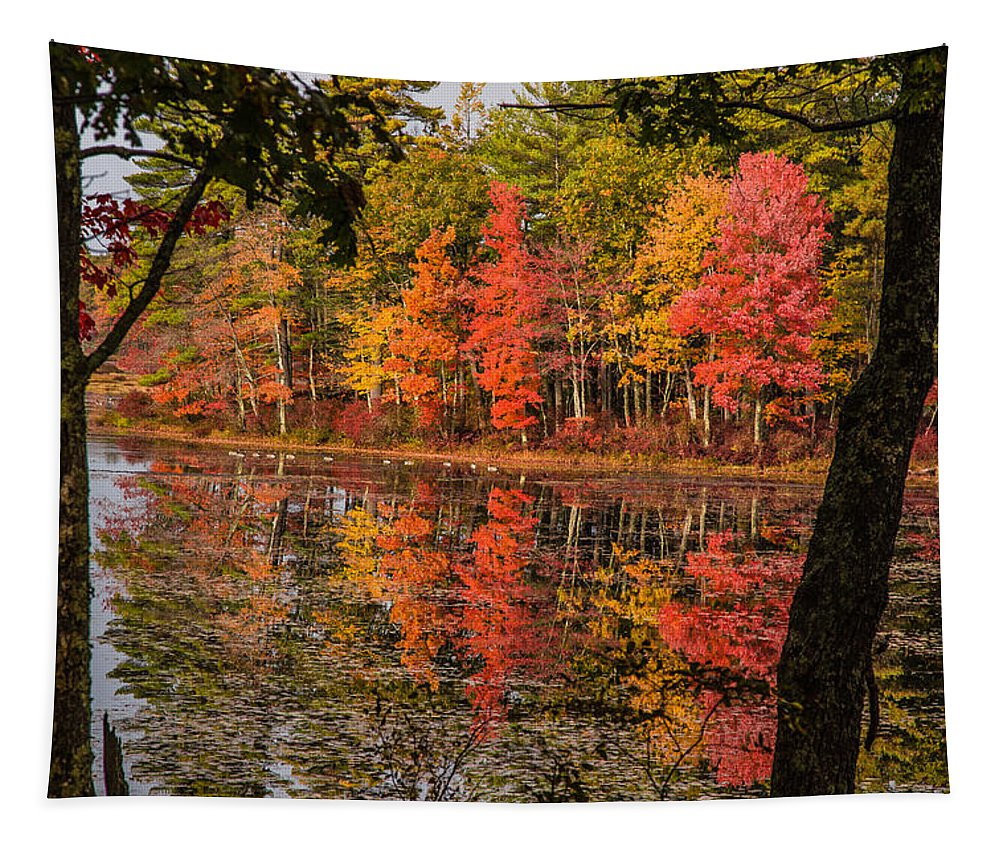 #foliage_reports Tapestry featuring the photograph Quabbin Reservoir Fall Foliage by Jeff Folger