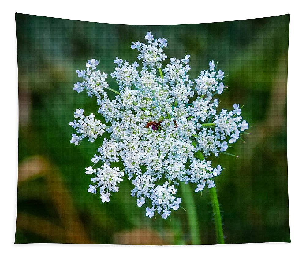 Flower Tapestry featuring the photograph Queen Anne's Lace by Steve Harrington