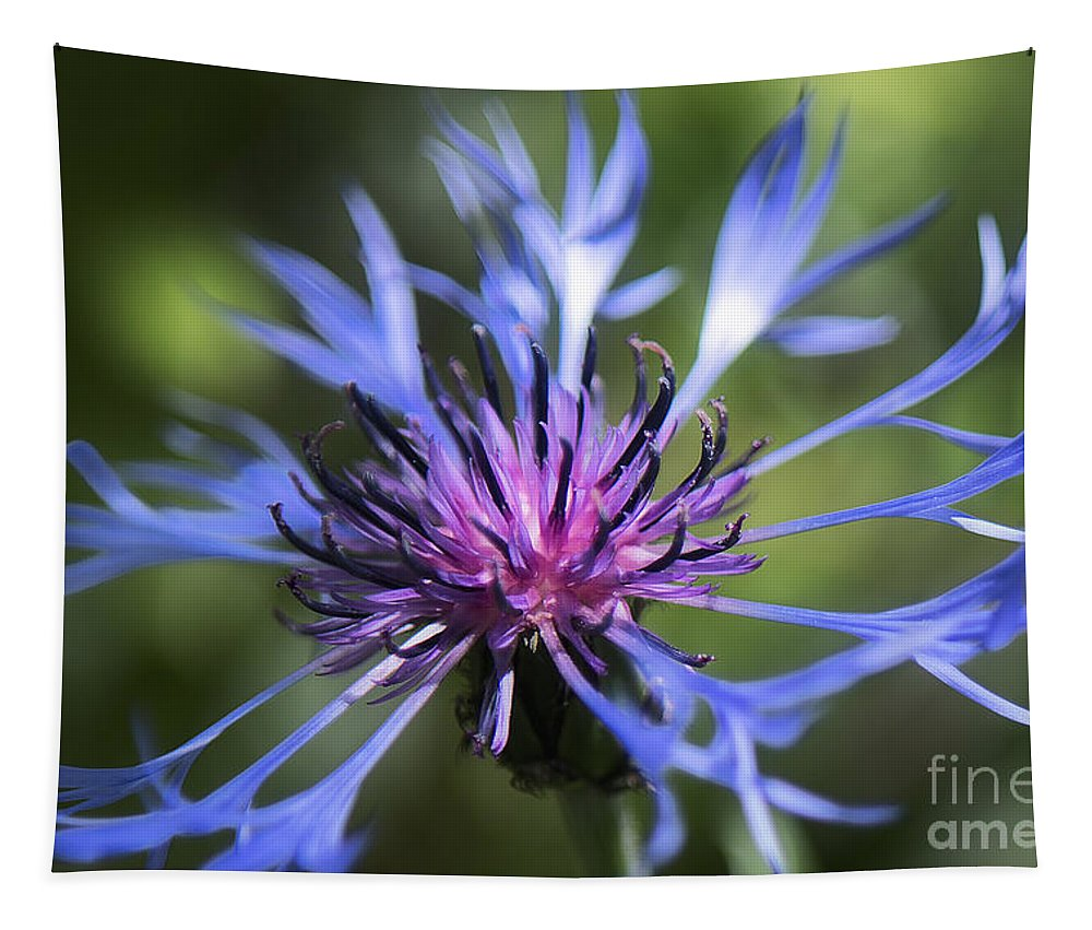 Bachelor's Button Tapestry featuring the photograph Radiant Flower by Belinda Greb