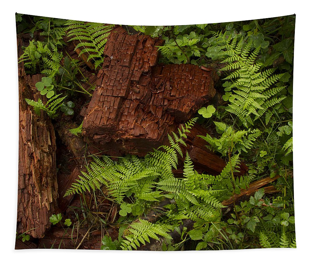 Fern Tapestry featuring the photograph Rain Forest Abstract by Jean Noren