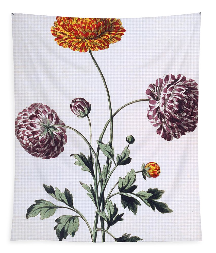 Still-life Tapestry featuring the painting Ranunculus by John Edwards