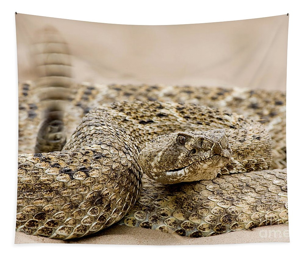 Rattlesnake Tapestry featuring the photograph Rattlesnake 1 by Jerry Fornarotto