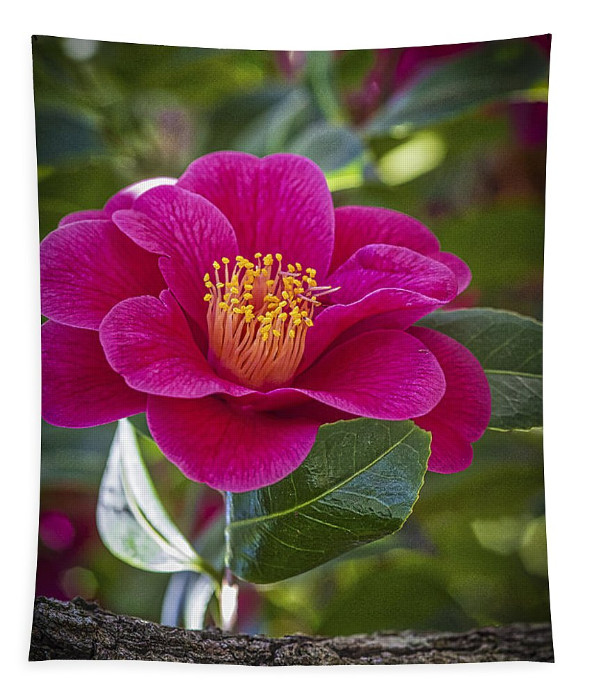 Red Camellia Flower Tapestry featuring the photograph Red Camellia Flower by Mitch Shindelbower
