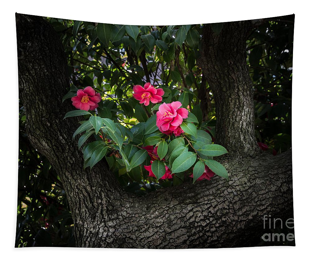 Red Camellias Tapestry featuring the photograph Red Camellias by Mitch Shindelbower