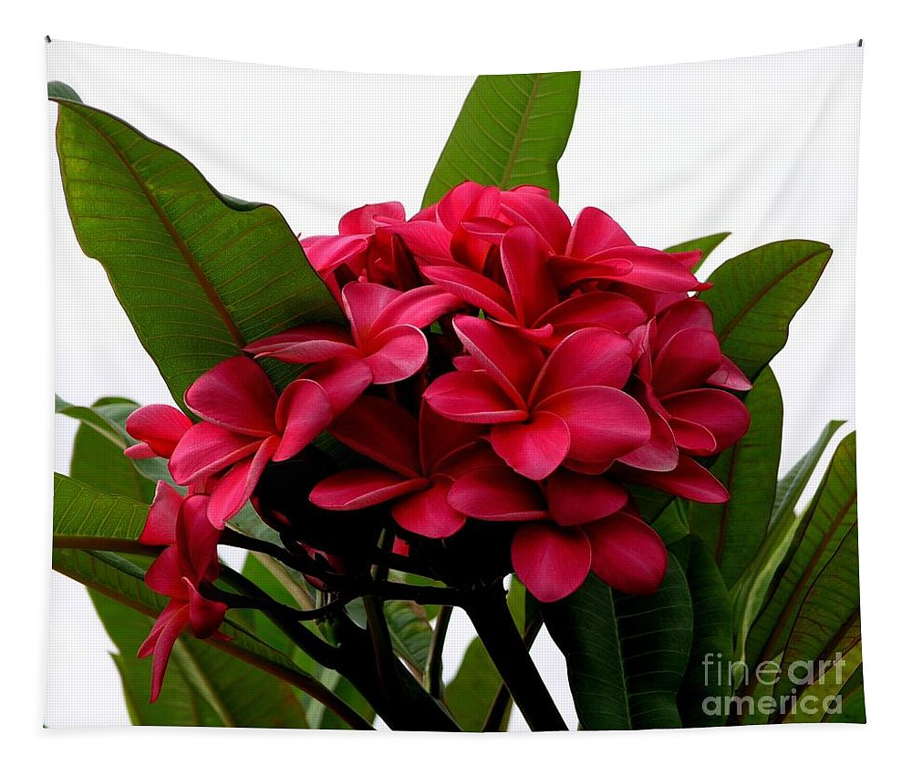 Plumeria Tapestry featuring the photograph Red Plumeria by Mary Deal