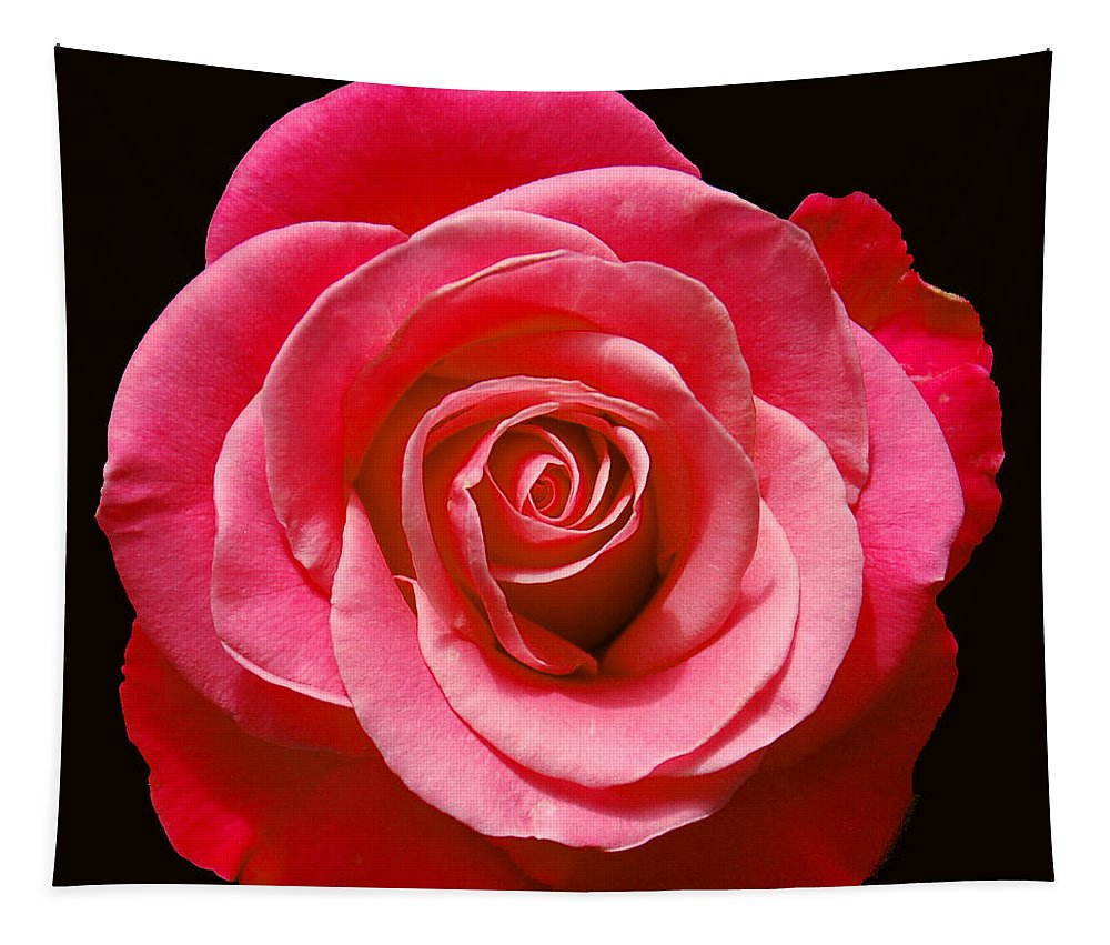 Rose Tapestry featuring the photograph Red Rose On Black by Aimee L Maher ALM GALLERY