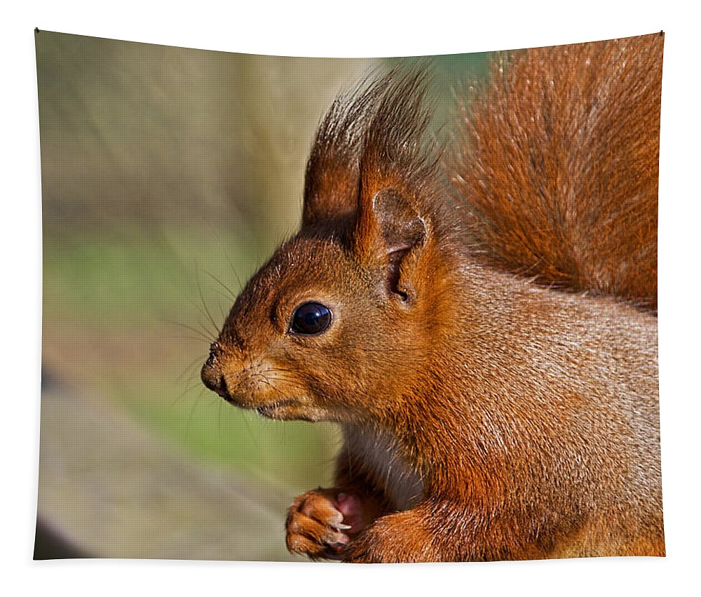 Squirrel Tapestry featuring the photograph Red Squirrel 2 by Susie Peek