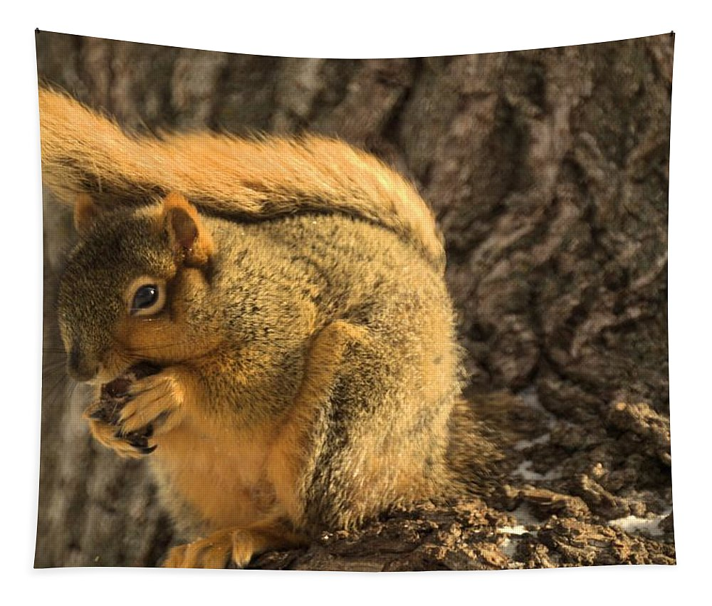 Squirrel Tapestry featuring the photograph Red Squirrel by Bonfire Photography