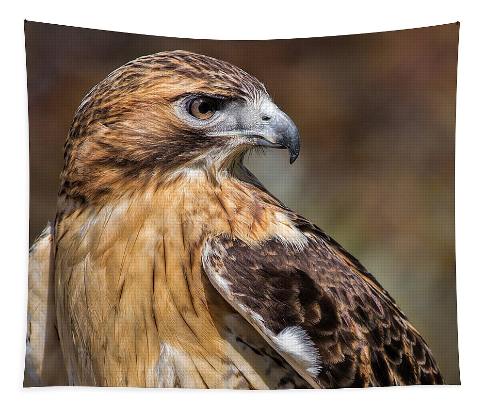 Red Tailed Hawk Tapestry featuring the photograph Red Tail Hawk by Dale Kincaid