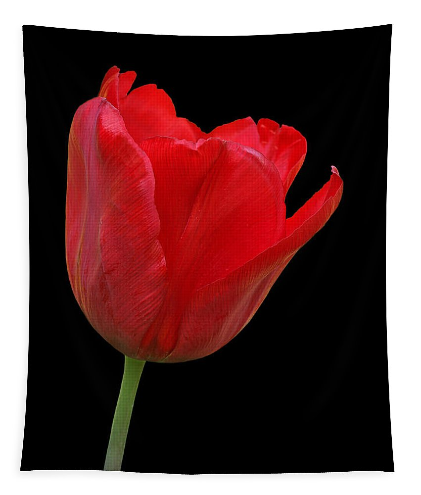 Red Tulip Tapestry featuring the photograph Red Tulip Open by Gill Billington