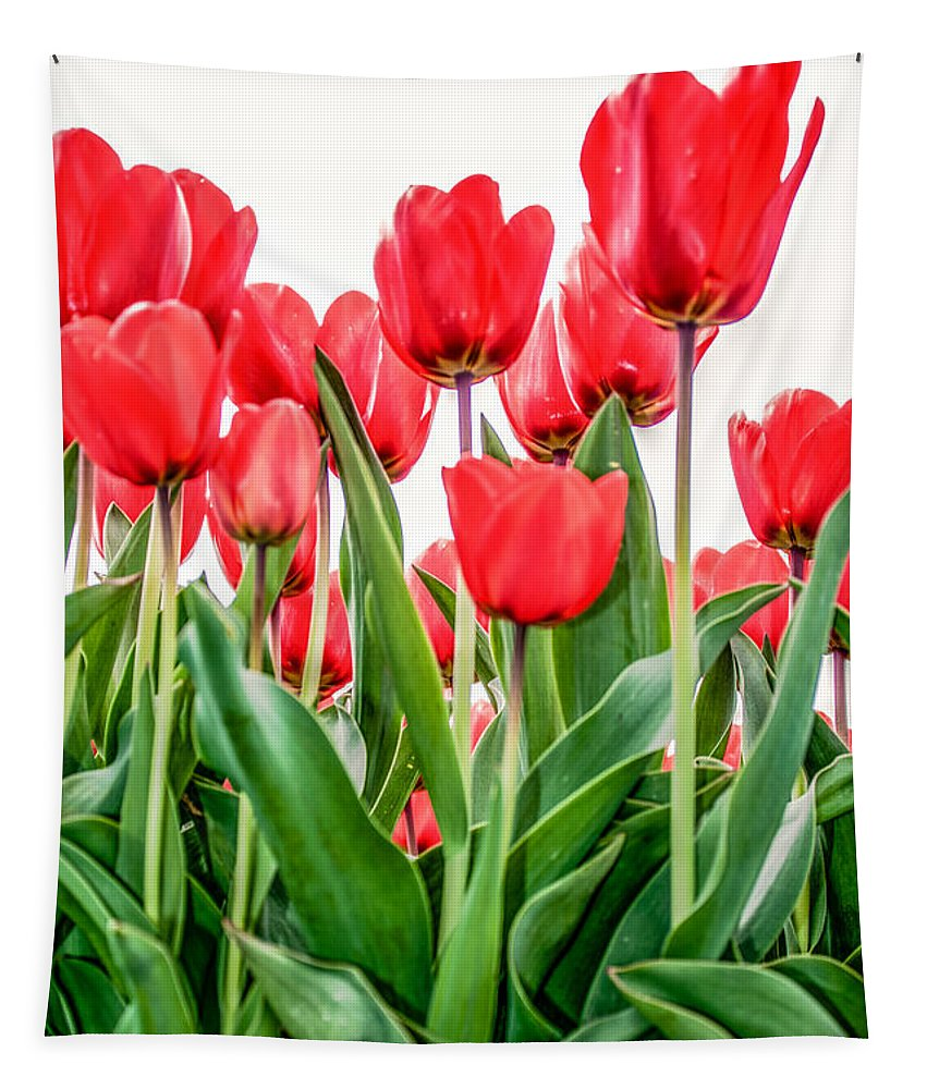 Green Tapestry featuring the photograph Red Tulips by Alex Hiemstra