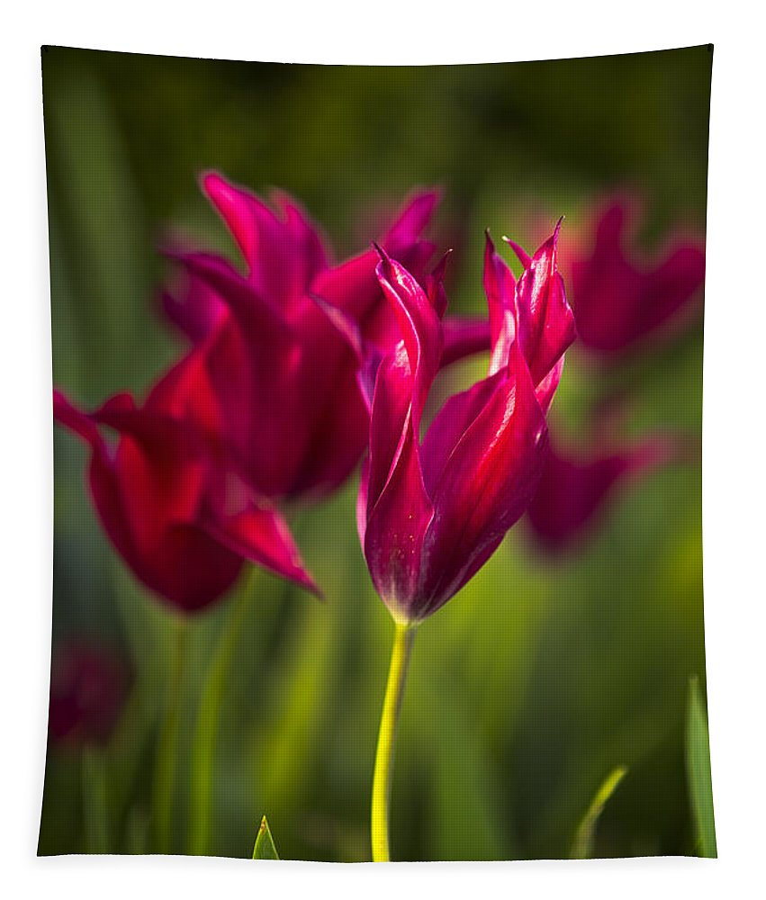 Tulip Tapestry featuring the photograph Red Tulips by Belinda Greb