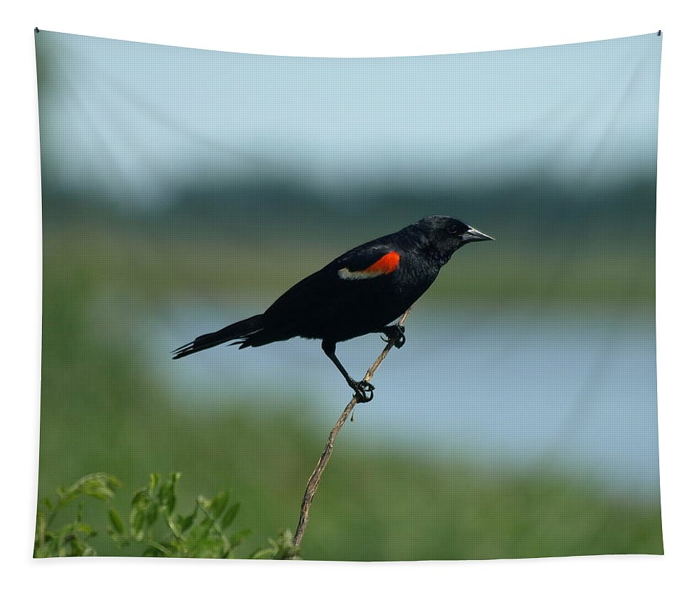 Nature Tapestry featuring the photograph Red-winged Blackbird Landscape by James Peterson