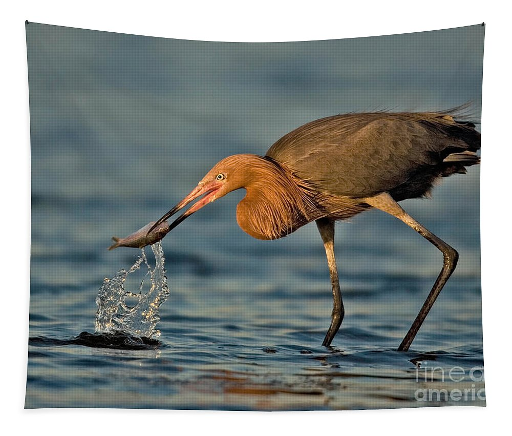 Birds Tapestry featuring the photograph Reddish Egret Strike by Jerry Fornarotto