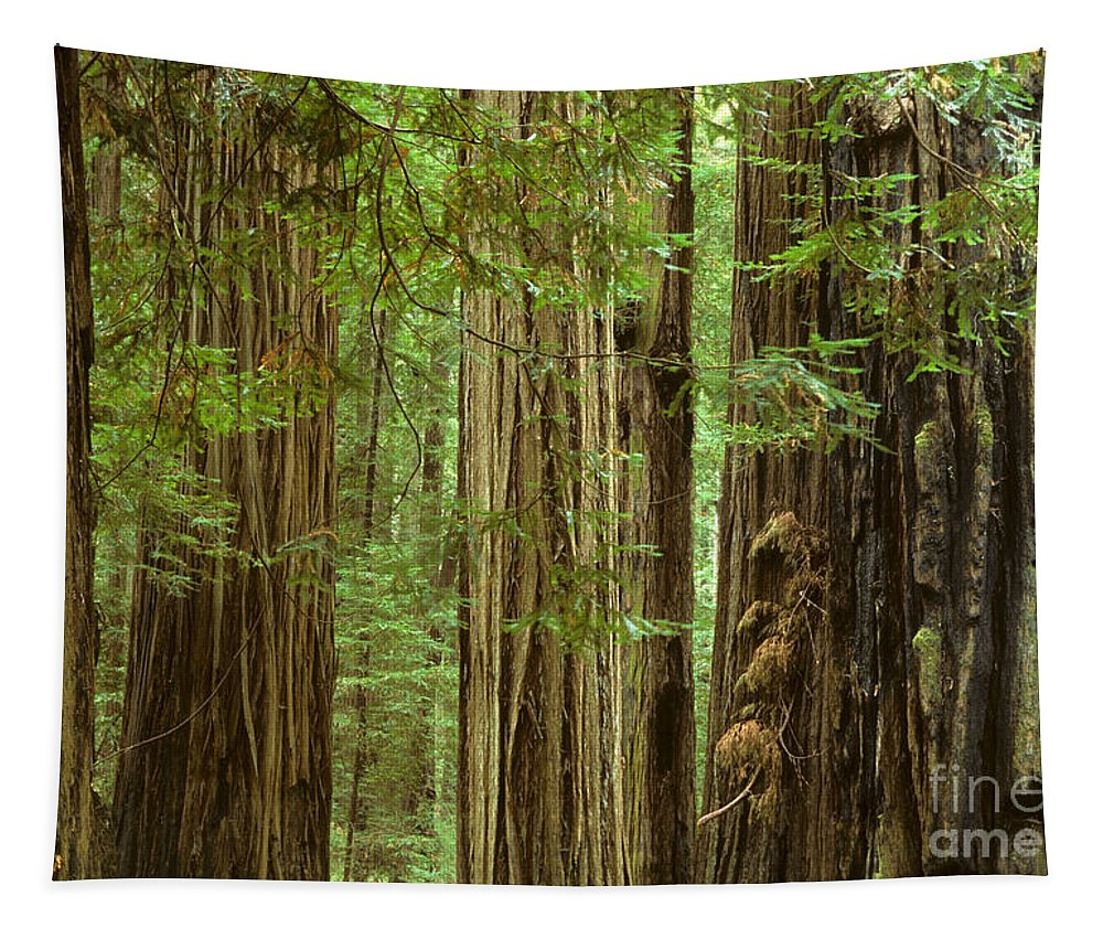Redwood Tapestry featuring the photograph Redwood Grove California by Bob Christopher