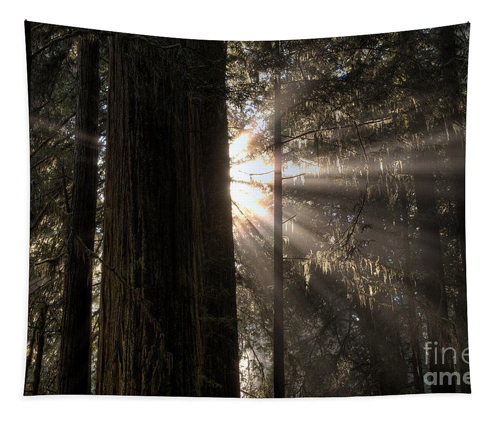 Redwoods Tapestry featuring the photograph Redwoods First Light by Bob Christopher