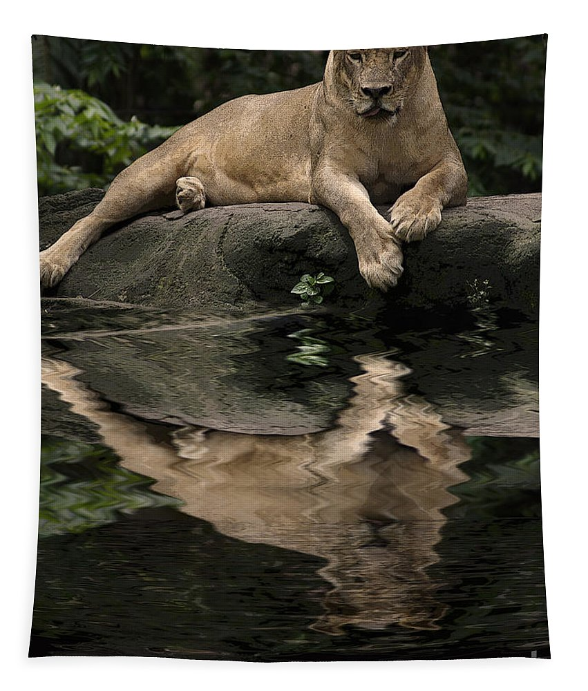 Animals Tapestry featuring the photograph Reflection by Ben Yassa