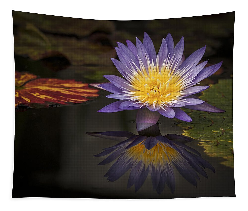 Pink Water Lily Tapestry featuring the photograph Reflective Water Lily Still Life by Jean Noren