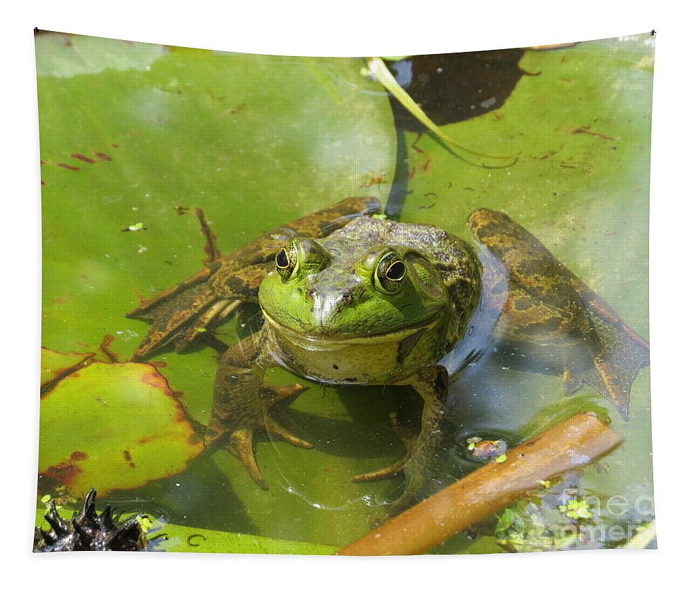 Nature Tapestry featuring the photograph Relaxing On A Lily Pad by Tom Gari Gallery-Three-Photography