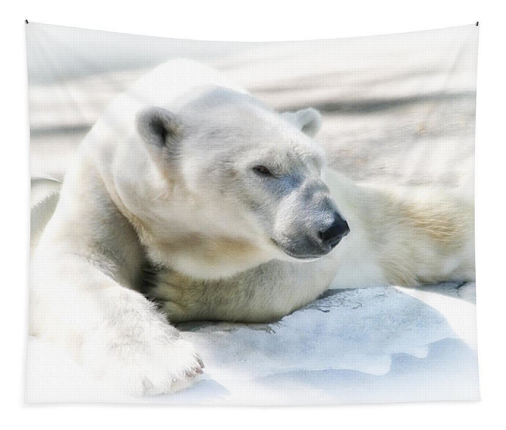 Bear Tapestry featuring the photograph Resting by Karol Livote
