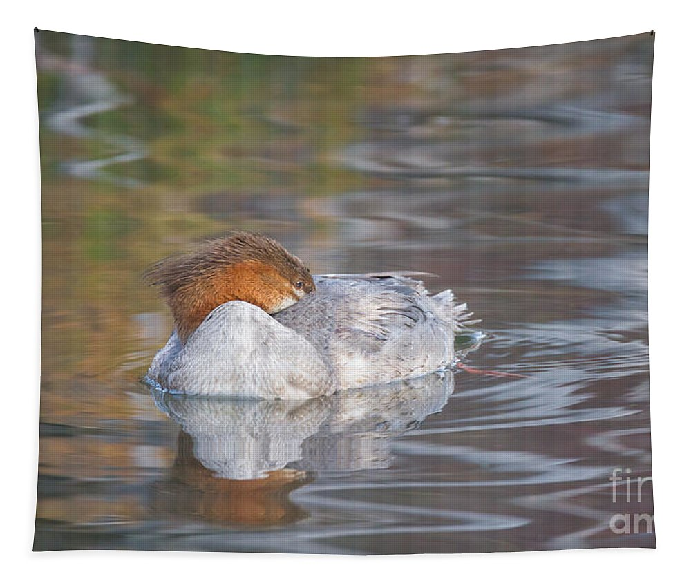 Resting Merganser Tapestry featuring the photograph Resting Merganser by Mitch Shindelbower
