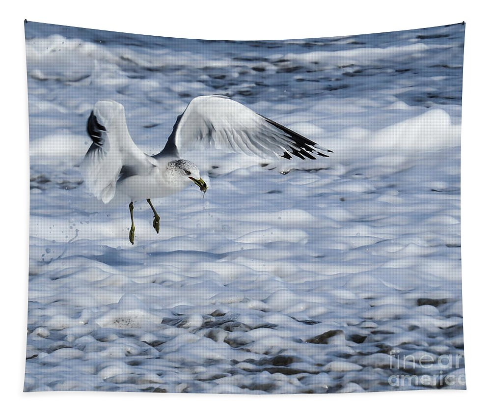 Gull Tapestry featuring the photograph Ring-billed Gull by Zina Stromberg