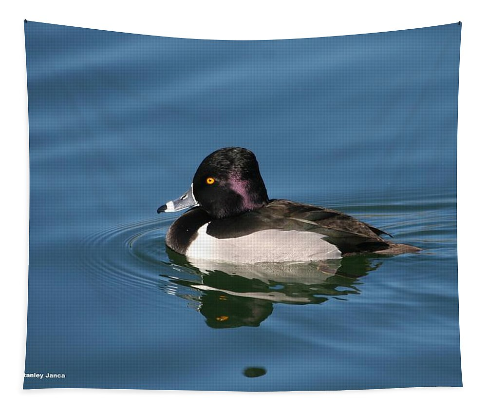 Ring Neck Duck Tapestry featuring the photograph Ring Neck Duck by Tom Janca