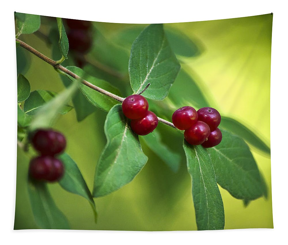 Red Berries Tapestry featuring the photograph Red Berries Botanical Christmas Art by Christina Rollo