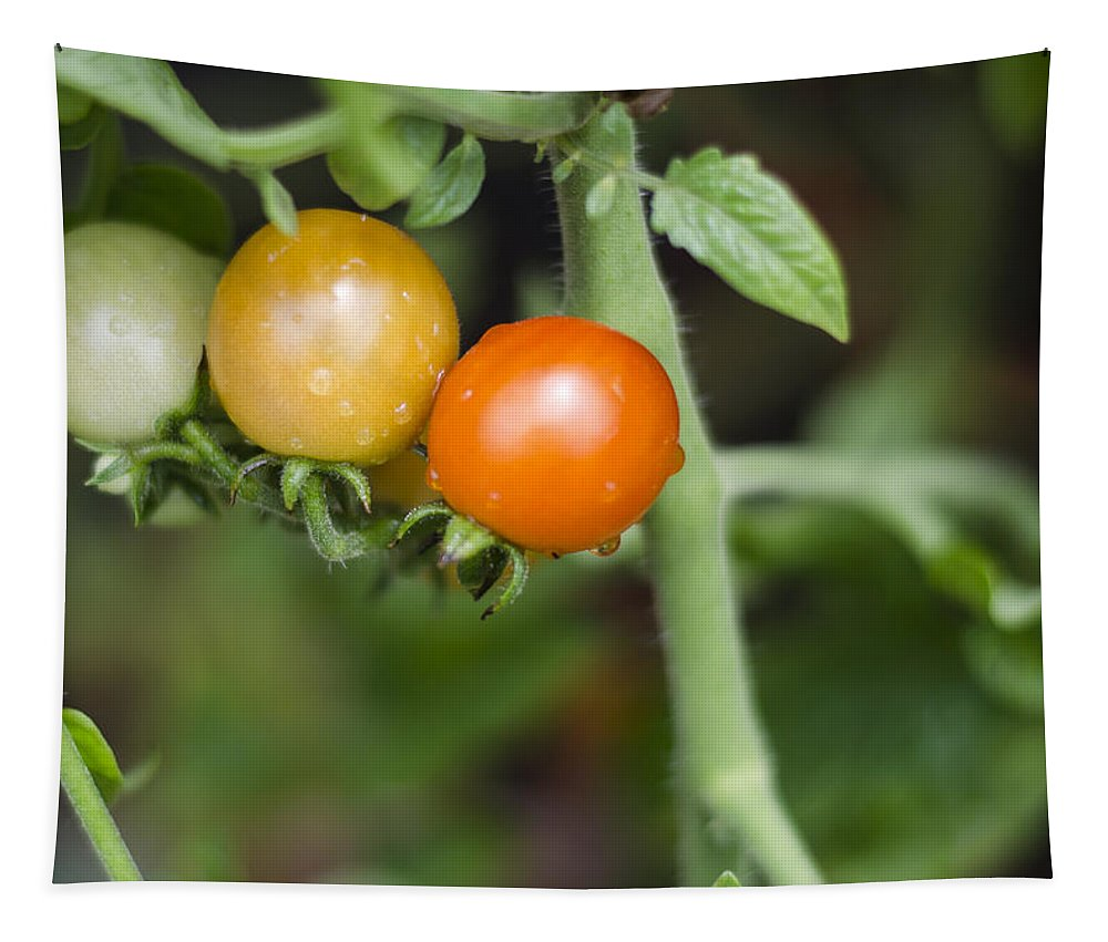 Tomatos Tapestry featuring the photograph Ripening by Heather Applegate