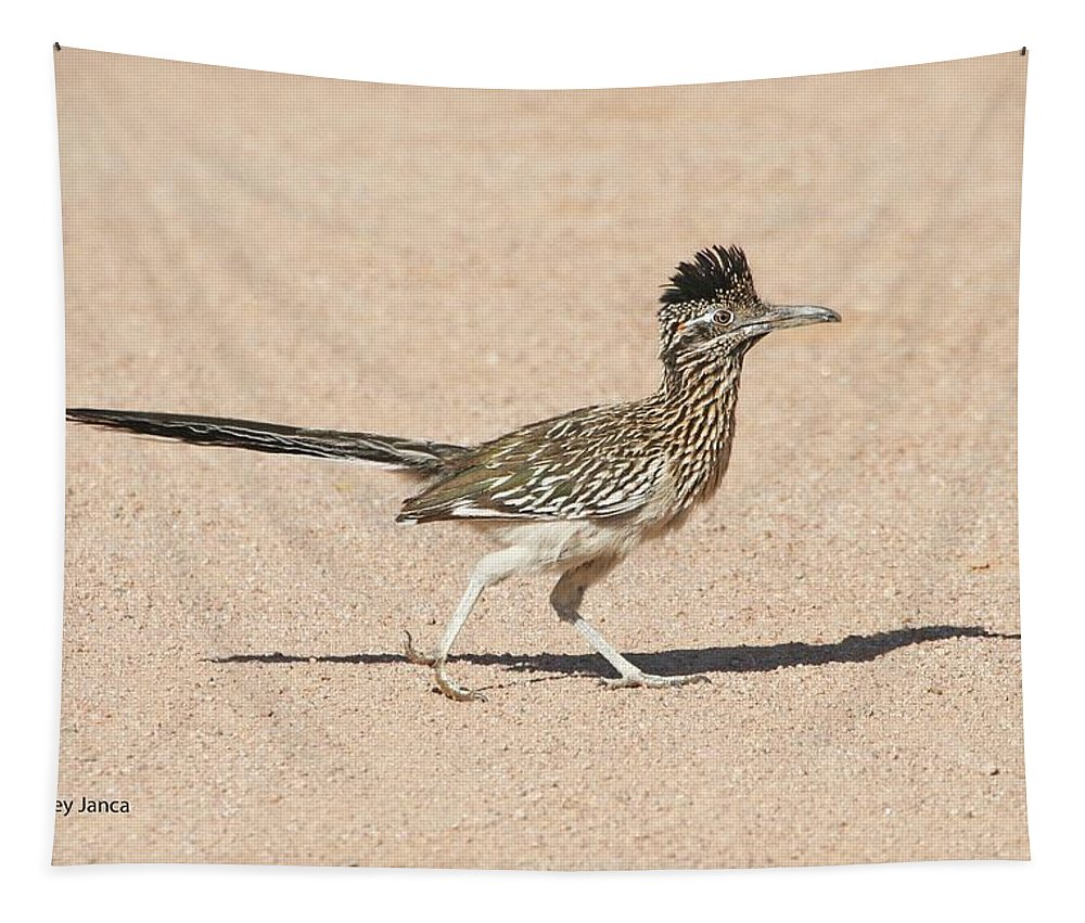 Road Runner Tapestry featuring the photograph Road Runner On The Road by Tom Janca