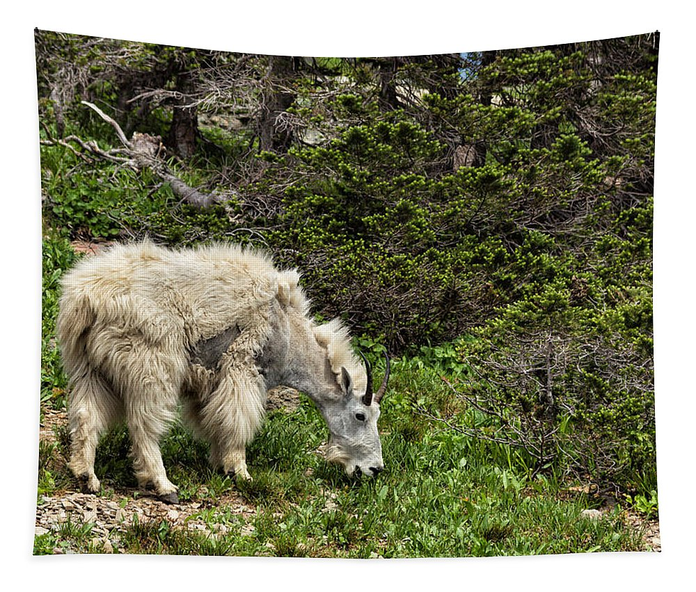 Mountain Goat Tapestry featuring the photograph Rocky Mountain Goat by Kathleen Bishop