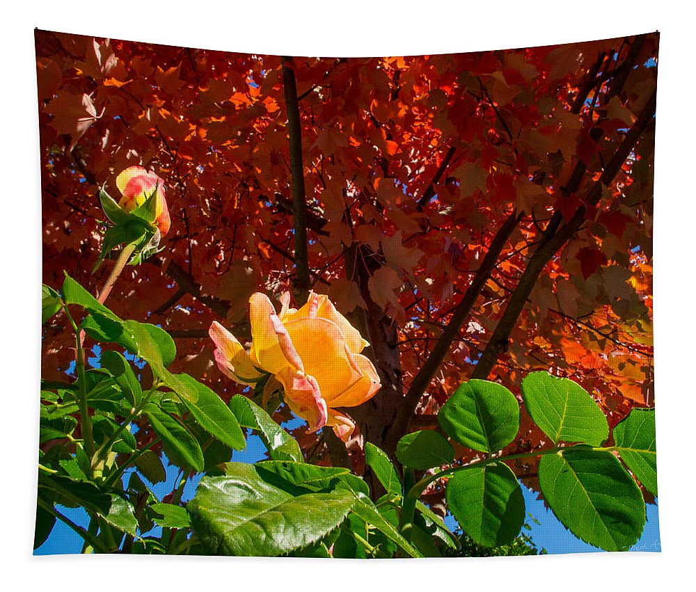 Rose Tapestry featuring the photograph Rose In Autumn by Mick Anderson