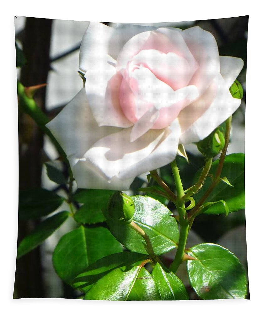 Innocence Tapestry featuring the photograph Rose Named Pearl by Sonali Gangane