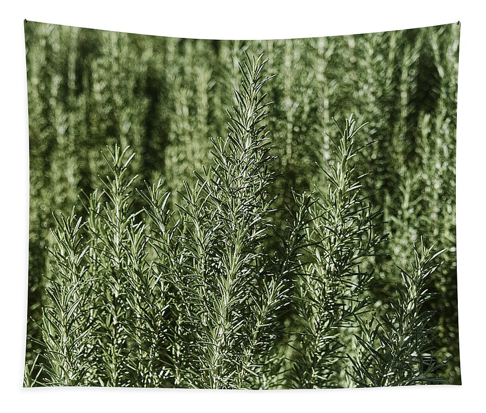 Rosemary Tapestry featuring the photograph Rosemary Forest by Mary Lane
