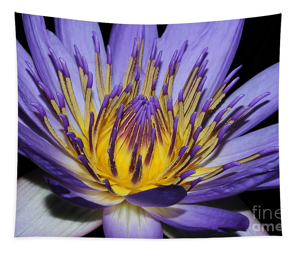 Royal Purple Water Lily Tapestry featuring the photograph Royal Purple Water Lily #5 by Judy Whitton