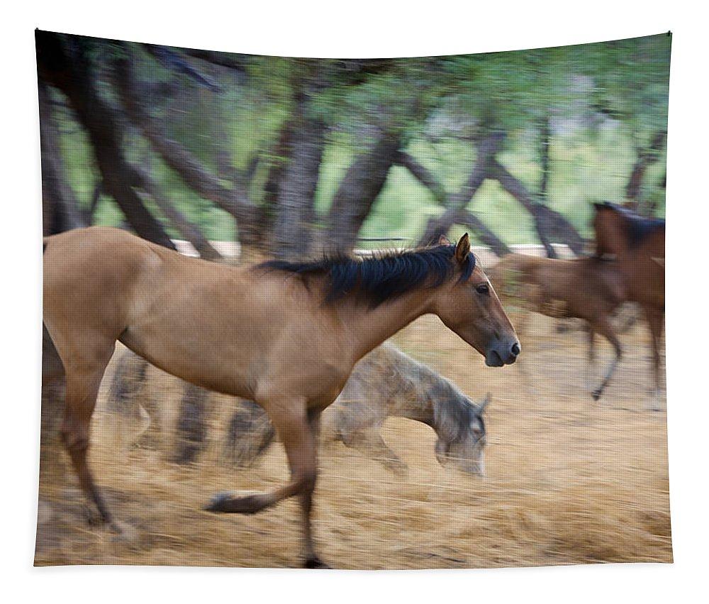 Wild Horses Tapestry featuring the photograph Running Free by Saija Lehtonen