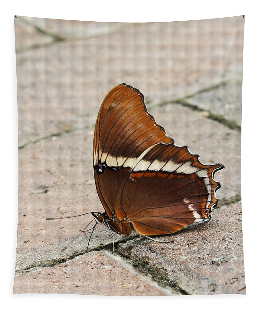 Butterfly Tapestry featuring the photograph Rusty Tipped Page Butterfly by Judy Whitton