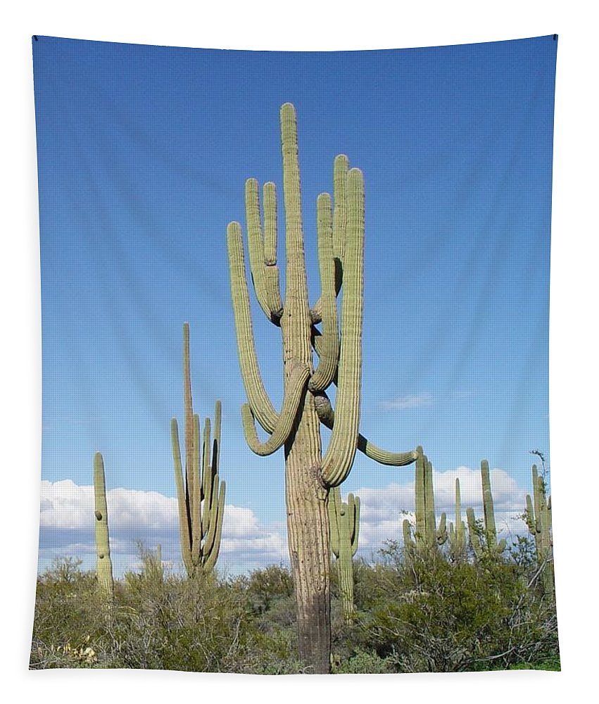 Saguaros With Green Grass Tapestry featuring the photograph Saguaros With Green Grass by Tom Janca