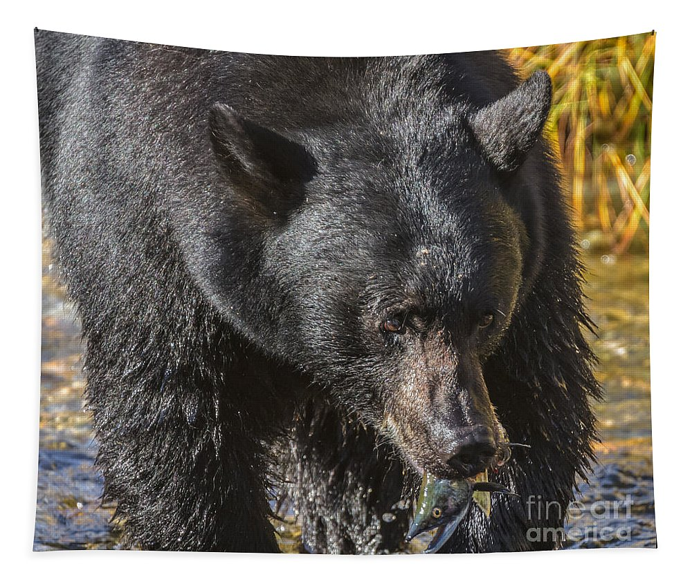 Black Bear Tapestry featuring the photograph Salmon Breakfast by Mitch Shindelbower