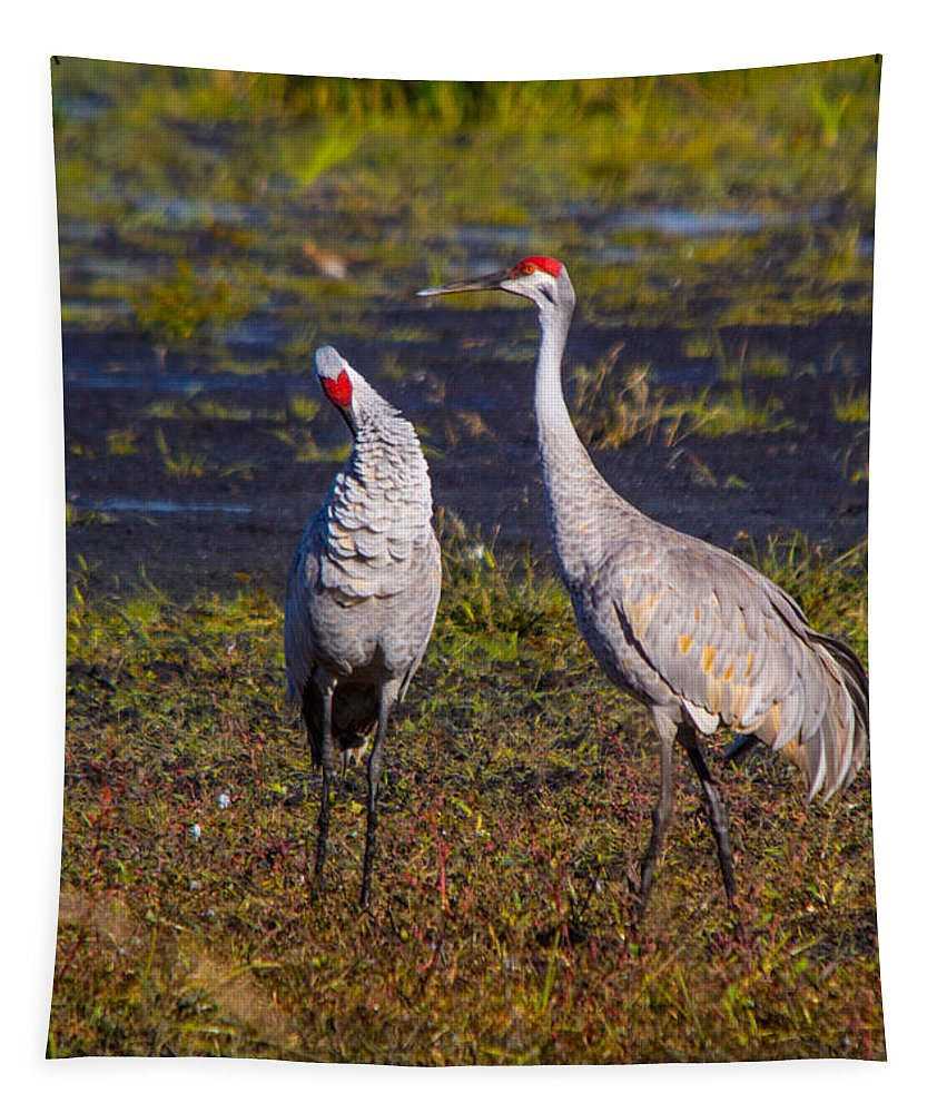 Sandhill Crane Tapestry featuring the photograph Sandhill Cranes by Robert Storost