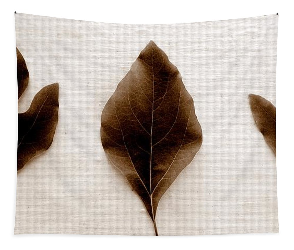 Sassafras Leaf Tapestry featuring the photograph Sassafras Leaves In Sepia by Michelle Calkins