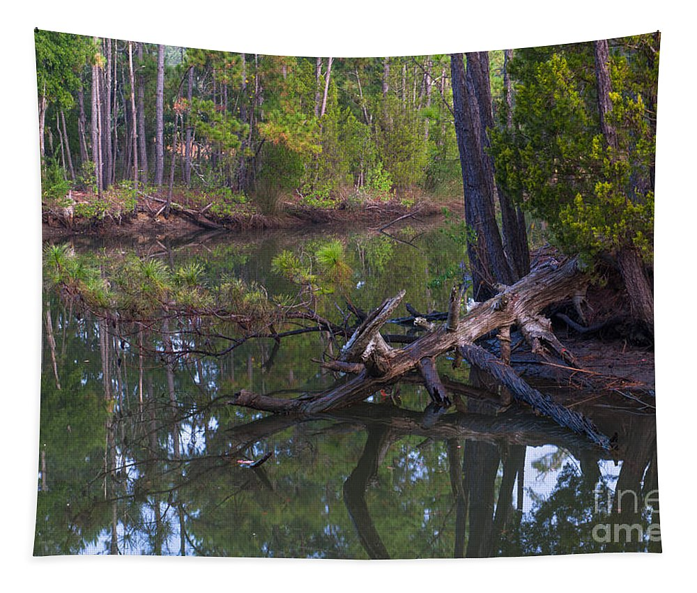 Dead Wood Tapestry featuring the photograph Save The Marsh by Dale Powell