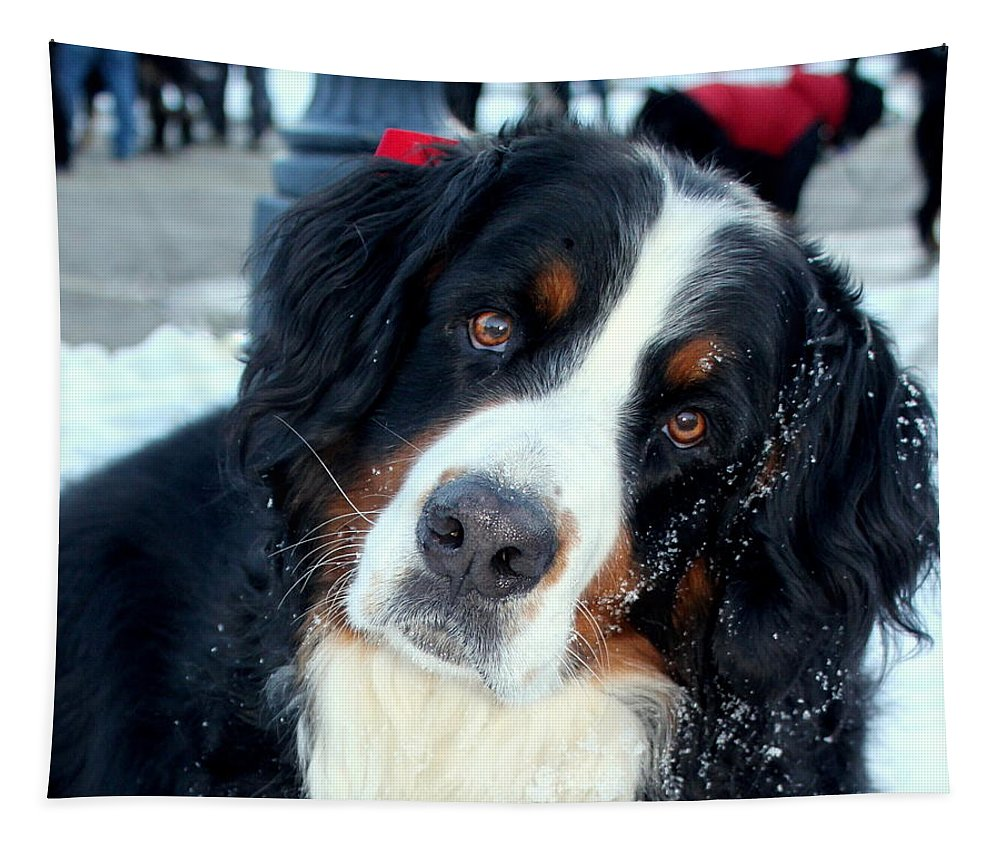 Bernese Mountain Dog Tapestry featuring the photograph You Said You Love Me by Fiona Kennard