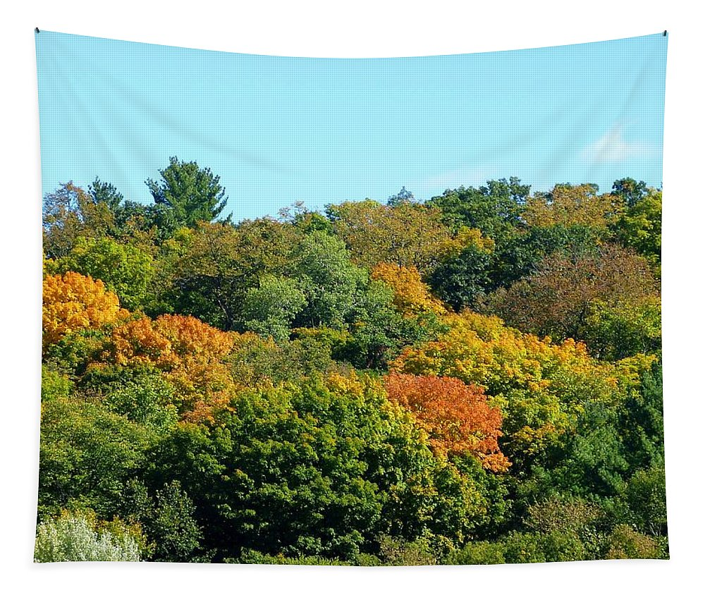 Scenic Minnesota 5 Tapestry featuring the photograph Scenic Minnesota 5 by Will Borden