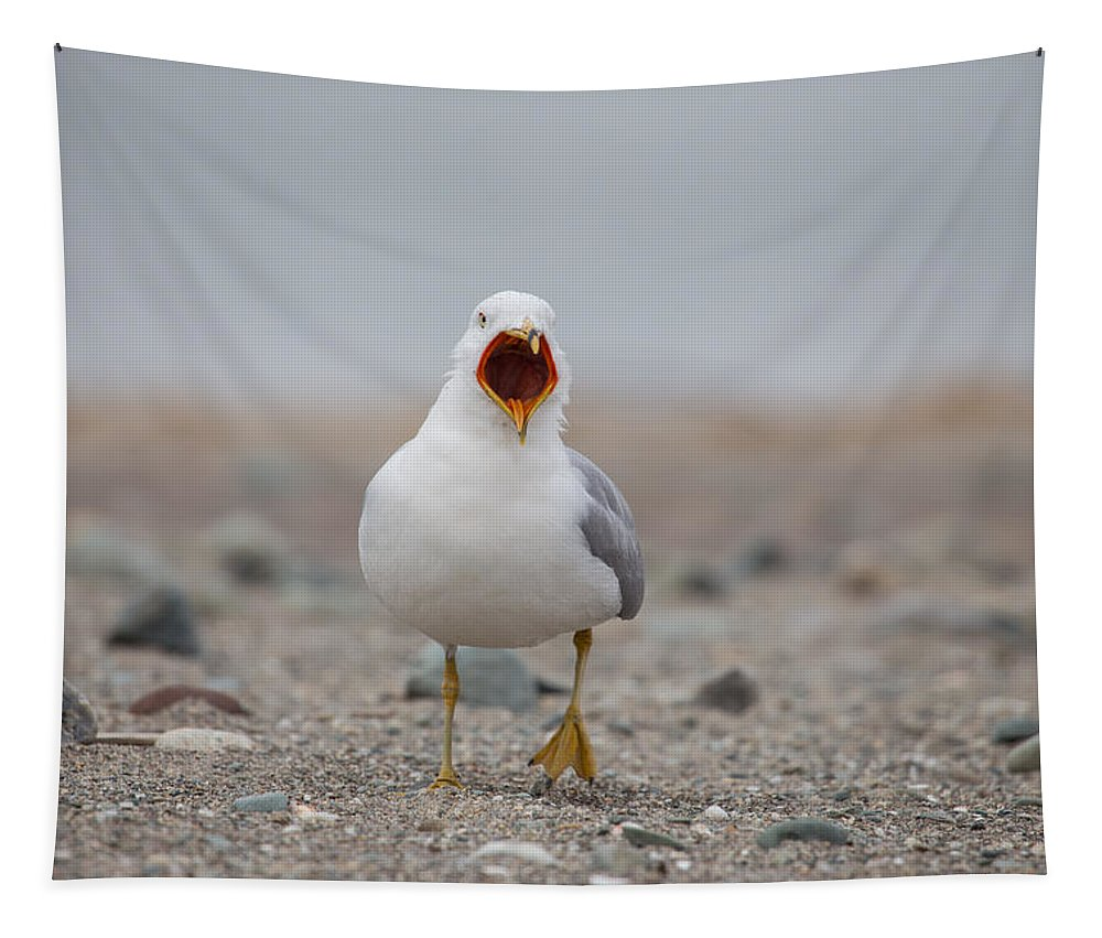Screaming Seagull Tapestry featuring the photograph Screaming Seagull by Karol Livote