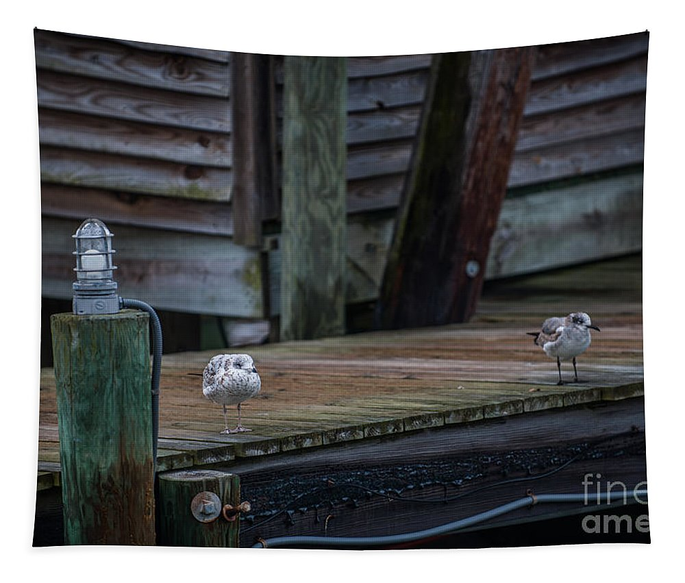 Sea Birds Tapestry featuring the photograph Sea Birds Dockside by Dale Powell