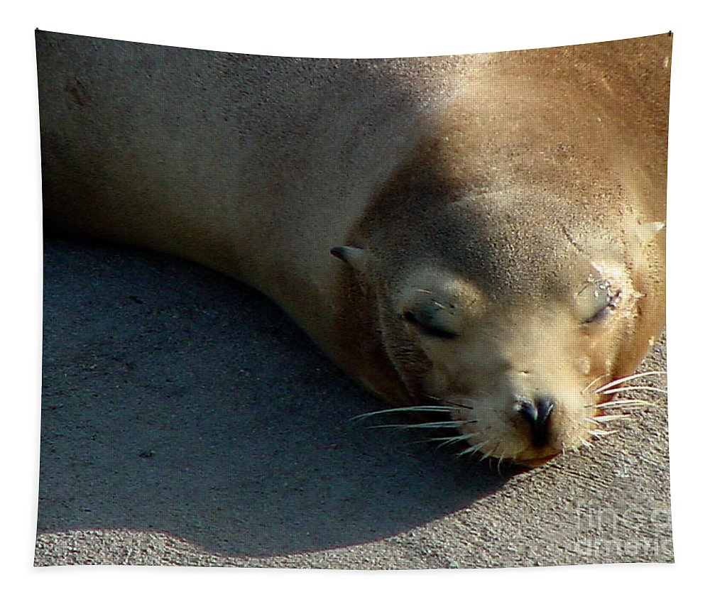 California Sea Lion Tapestry featuring the photograph Sea Lion-00178 by Gary Gingrich Galleries