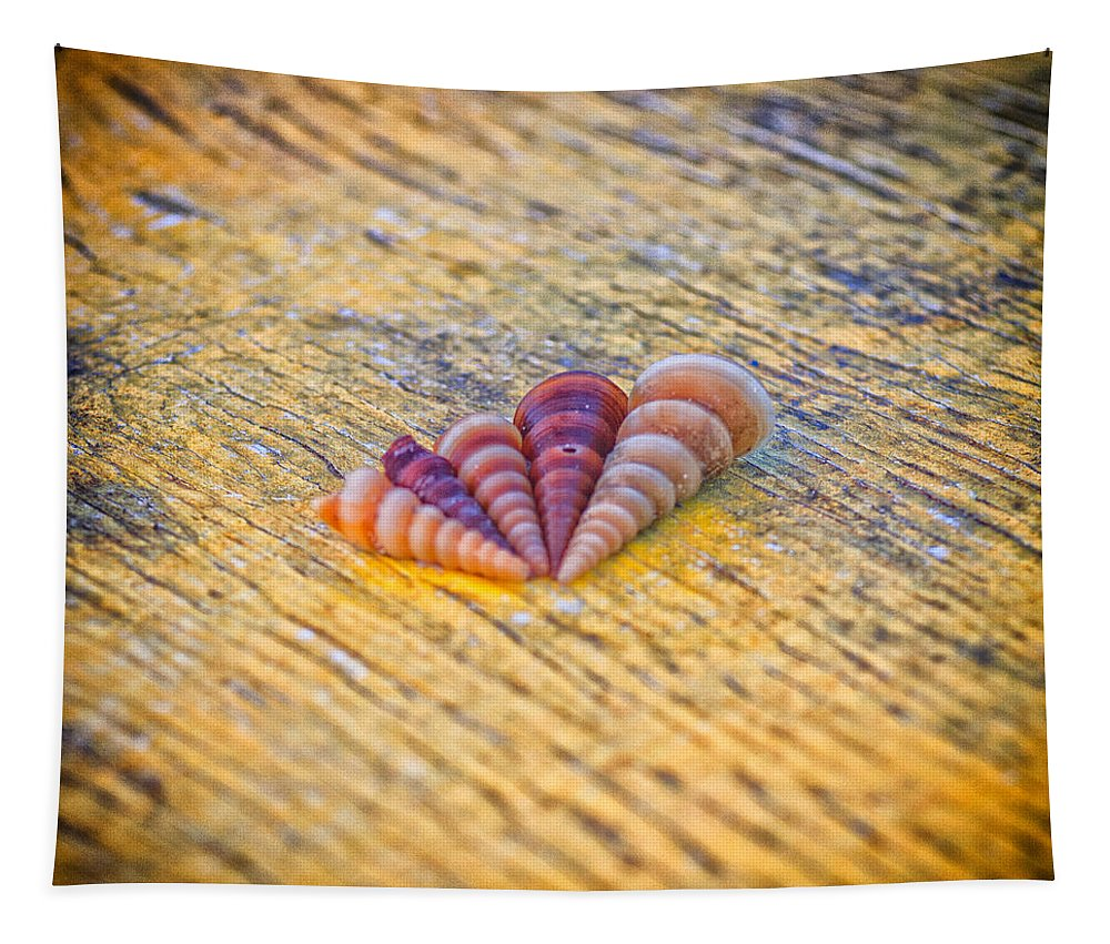 Abstract Tapestry featuring the photograph Sea Shells by Stelios Kleanthous