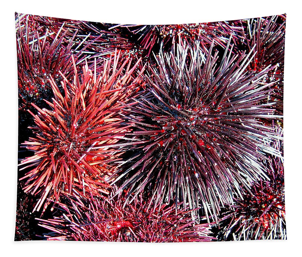 Sea Urchin Tapestry featuring the photograph Sea Urchin by Jerome Stumphauzer