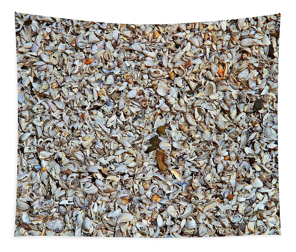 Seashells Tapestry featuring the photograph Seashells by Dan Sproul
